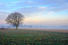 Tramonto nebbioso variopinto nei campi con il cielo nuvoloso Fotografia Stock Libera da Diritti