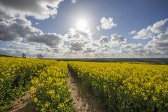 Tramonto nei campi dell'azienda agricola con l'albero ed il bello cielo nuvoloso, Cornovaglia, Regno Unito Fotografia Stock