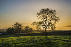 Tramonto nei campi dell'azienda agricola con l'albero ed il bello cielo nuvoloso, Cornovaglia, Regno Unito Fotografie Stock Libere da Diritti