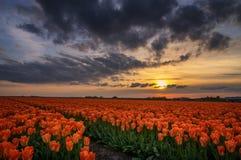 Tramonto nei Paesi Bassi Fotografia Stock Libera da Diritti