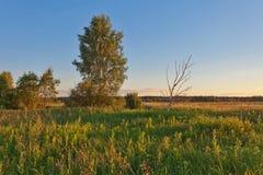 Tramonto nel campo di estate Fotografia Stock Libera da Diritti