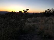 Tramonto nel deserto fotografia stock