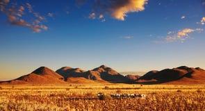 Tramonto nel deserto di Kalahari fotografia stock libera da diritti