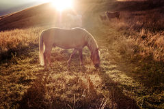 Tramonto nel fondo della natura delle montagne I cavalli profilano a foschia Immagini Stock Libere da Diritti