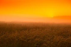 Tramonto nel giacimento di grano ad agosto Fotografia Stock Libera da Diritti