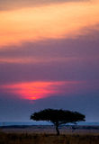 Tramonto nel Maasai Mara National Park l'africa kenya fotografie stock