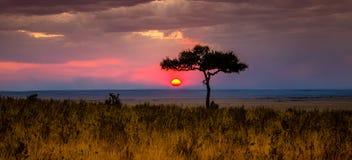 Tramonto nel Masai Mara Immagine Stock