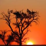 Tramonto nel Namibia Immagine Stock