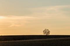 Tramonto nel paesaggio autunnale con la siluetta dell'albero del solitario Fotografie Stock