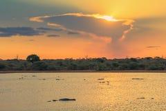 Tramonto nel parco nazionale di Kruger con i coccodrilli che nuotano Fotografia Stock