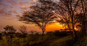 Tramonto nel Serengeti Immagini Stock