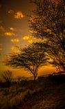 Tramonto nel Serengeti Fotografie Stock