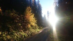 Tramonto nella foresta Fotografie Stock