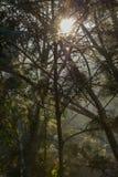 Tramonto nella foresta Fotografie Stock Libere da Diritti