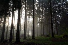 Tramonto nella foresta Fotografia Stock