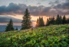 Tramonto nella foresta della montagna fotografie stock libere da diritti