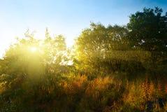 Tramonto nella foresta di autunno immagini stock