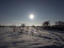 Tramonto nella foresta di inverno immagini stock