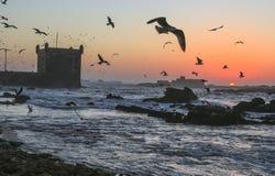 Tramonto nella fortezza di Essaouira, Marocco Immagine Stock Libera da Diritti