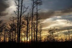 tramonto nella palude della Luisiana Immagine Stock