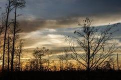 tramonto nella palude della Luisiana Immagini Stock Libere da Diritti