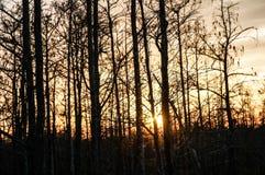 tramonto nella palude della Luisiana Immagini Stock