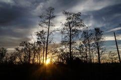 tramonto nella palude della Luisiana Fotografia Stock