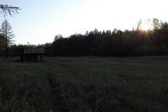 Tramonto nella radura della foresta Fotografia Stock Libera da Diritti
