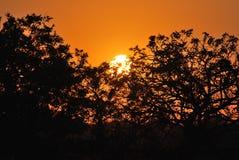 Tramonto nella riserva di caccia privata di Kapama fotografia stock libera da diritti