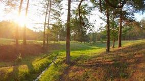 Tramonto nella vista magica della foresta del ruscello, dell'erba verde, degli alberi e del sole luminoso archivi video