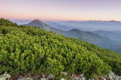 Tramonto nelle montagne foreground Arbusti coniferi fotografia stock