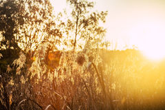 Tramonto nelle zone umide di Warriewood Fotografia Stock