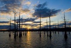 Tramonto nero dei rami paludosi di fiume Fotografie Stock