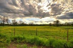 Tramonto nuvoloso sopra il campo fiorito giallo Fotografia Stock
