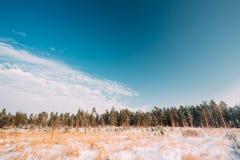 Tramonto o alba in Snowy Forest Landscape Alberi di legni nell'inverno Immagini Stock Libere da Diritti