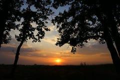 Tramonto oltre l'orizzonte ed il cielo di sera Negli alberi della priorità alta in wi Immagini Stock