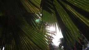 Tramonto in parco asiatico Sun che splende tramite le foglie verdi delle palme Foglie delle oscillazioni della brezza delicata video d archivio