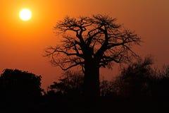 Tramonto - parco nazionale di Kruger immagini stock libere da diritti
