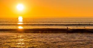 Tramonto praticante il surfing Fotografie Stock Libere da Diritti