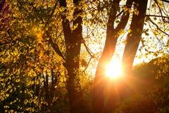 Tramonto precedenti di stagione della foresta di autunno nei bei Immagine Stock