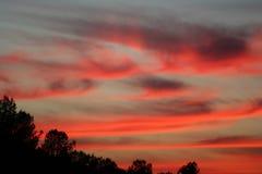 Tramonto rosa luminoso con i cirri fotografia stock libera da diritti