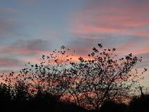 Tramonto rosa nel villaggio Fotografia Stock