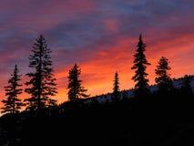 Tramonto rosa vibrante dietro le siluette del pino Immagine Stock Libera da Diritti