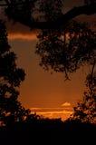 Tramonto rosso attraverso gli alberi che uguagliano, Australia Immagine Stock