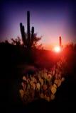 Tramonto rosso del saguaro Immagine Stock