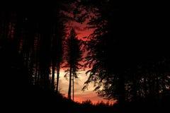 Tramonto rosso di Firey attraverso il legno hauntingly scuro fotografie stock libere da diritti