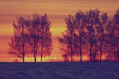 Tramonto rosso di inverno con gli alberi Immagini Stock