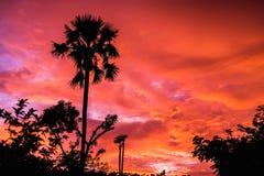 Tramonto rosso e palma Fotografie Stock Libere da Diritti