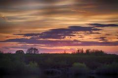 Tramonto rosso ed alberi del sole Fotografia Stock Libera da Diritti