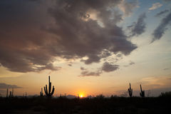 Tramonto in Saguaro NP Fotografia Stock Libera da Diritti